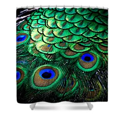 Feather Abstract Shower Curtain by Karen Wiles