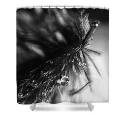 Feathery Drop Shower Curtain by Lauri Novak