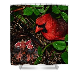 Feed Me Daddy Shower Curtain by Frozen in Time Fine Art Photography
