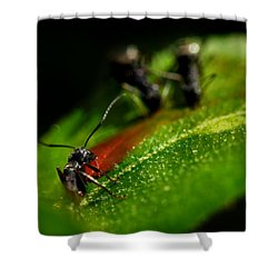 Feeding Black Ants Shower Curtain by Michael Eingle