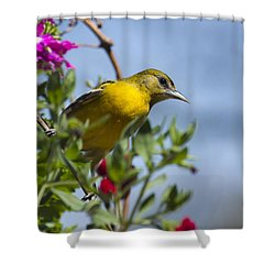 Female Baltimore Oriole In A Flower Basket Shower Curtain by Christina Rollo