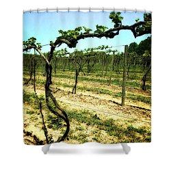 Fenn Valley Vineyards Shower Curtain by Michelle Calkins