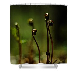 Fern Emergent Shower Curtain by Rebecca Sherman