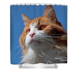 Festus... Shower Curtain by Nina Stavlund