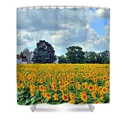 Field Of Sunflowers Shower Curtain by Kathleen Struckle