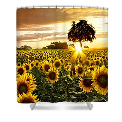 Fields Of Gold Shower Curtain by Debra and Dave Vanderlaan