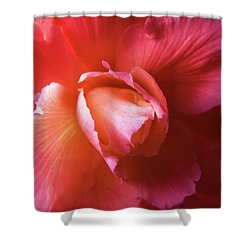 Fire And Ice Floral Begonia Shower Curtain by Jennie Marie Schell