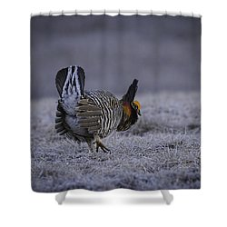 First Light 3 Shower Curtain by Thomas Young
