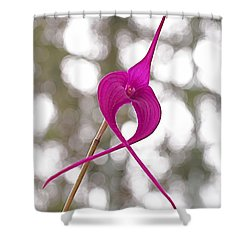 First Prize Shower Curtain by Rona Black