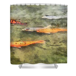 Fish - School Of Koi Shower Curtain by Susan Savad