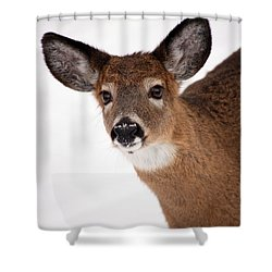 Fits Those Ears Shower Curtain by Karol Livote
