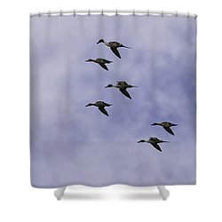 Flight Of The Pintails 1 Shower Curtain by Thomas Young