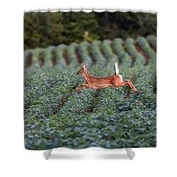 Flight Of The White-tailed Deer Shower Curtain by Everet Regal