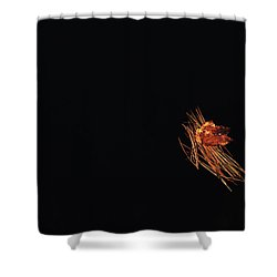 Floating Shower Curtain by Karol Livote