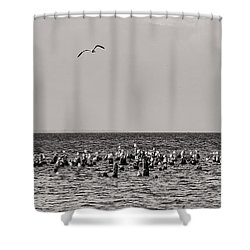Flock Of Seagulls In Black And White Shower Curtain by Sebastian Musial