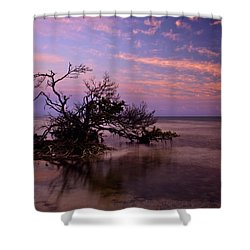 Florida Mangrove Sunset Shower Curtain by Mike  Dawson