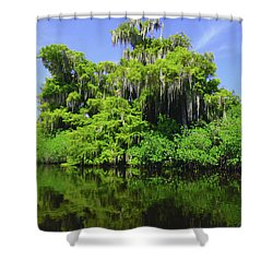 Florida Swamps Shower Curtain by Carey Chen