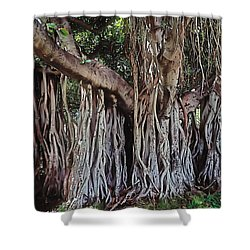 Flow Shower Curtain by Terry Reynoldson