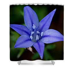 Flower From Paradise Lost Shower Curtain by Kim Pate