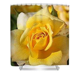 Flower-yellow Rose-delight Shower Curtain by Joy Watson