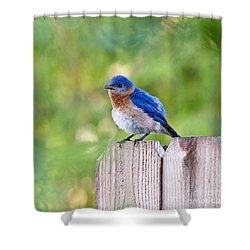 Fluffed Up Shower Curtain by Scott Pellegrin