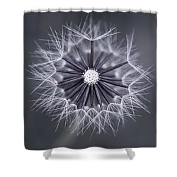 Fluffy Sun - S99b Shower Curtain by Variance Collections