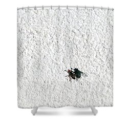 Fly On A Wall Shower Curtain by Alexander Senin