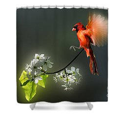 Flying Cardinal Landing On Branch Shower Curtain by Dan Friend