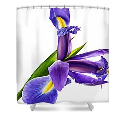 Flying Purple People Pleaser Shower Curtain by Steve Harrington