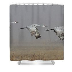 Follow The Leader Shower Curtain by Ruth Jolly