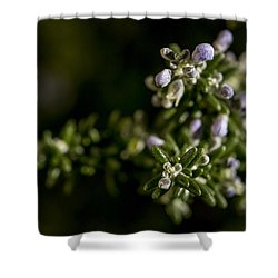 For Remembrance Shower Curtain by Caitlyn  Grasso