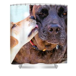 For The Love Of Dogs Shower Curtain by Janice Rae Pariza