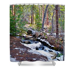 Forest Creek 4 Shower Curtain by Brent Dolliver