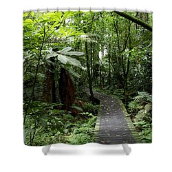 Forest Path Shower Curtain by Les Cunliffe