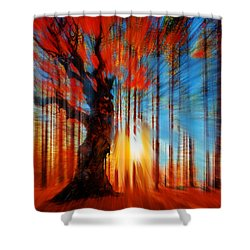 Forrest And Light Shower Curtain by Tony Rubino