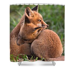 Fox Cubs Cuddle Shower Curtain by William Jobes