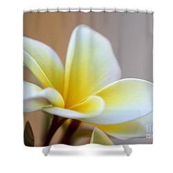 Fragrant Frangipani Flower Shower Curtain by Sabrina L Ryan