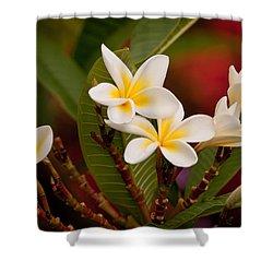 Frangipani - Plumeria Shower Curtain by Michelle Wrighton
