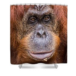 Friendship Card Shower Curtain by Edward Fielding