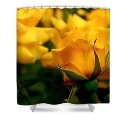 Friendship Roses Shower Curtain by Rona Black