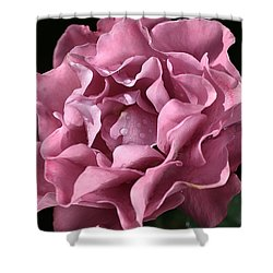 Frilly Rose Shower Curtain by Joy Watson