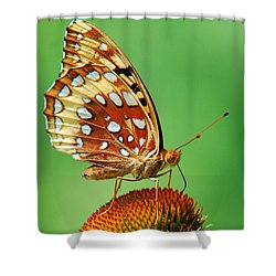 Fritillary Butterfly Shower Curtain by Christina Rollo
