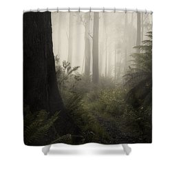 From Darkness Shower Curtain by Amy Weiss