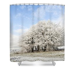 Frosted Copse Shower Curtain by Anne Gilbert