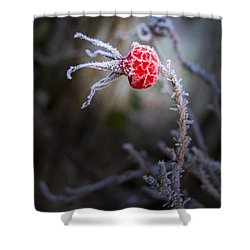 Frosted Shower Curtain by Jean Noren