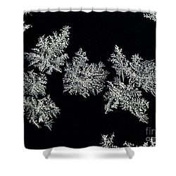 Frosty Snowflakes Shower Curtain by Mariola Bitner