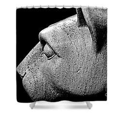 Garatti's Lion Shower Curtain by Tom Gari Gallery-Three-Photography