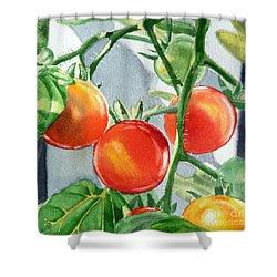Garden Cherry Tomatoes  Shower Curtain by Irina Sztukowski