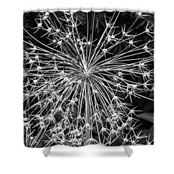 Garden Fireworks 2 Monochrome Shower Curtain by Steve Harrington