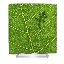Gecko Shower Curtain by Aged Pixel